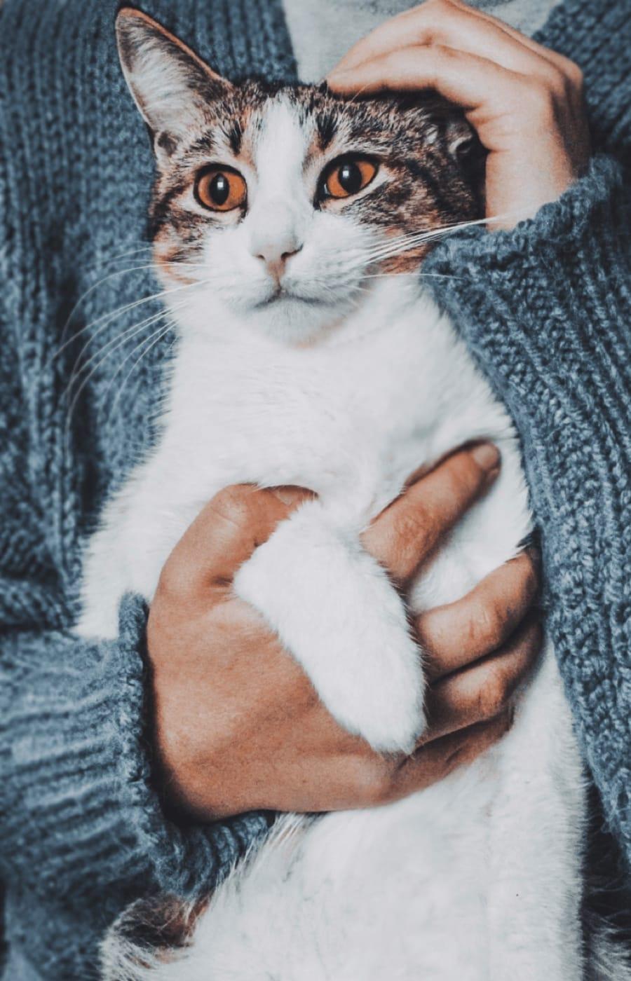 Maxi cat