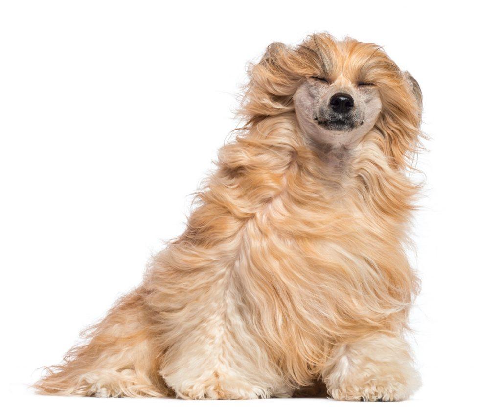 kozoo, l'assurance chien chat qui décoiffe