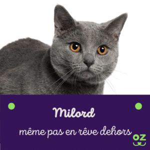 chat chartreux classement race