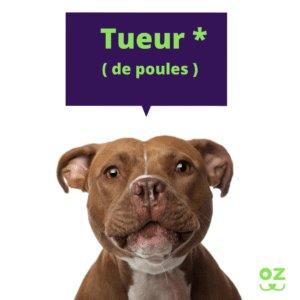 american staffordshire terrier assurance