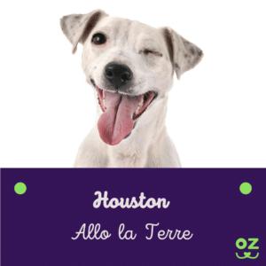 jack russel terrier assurance