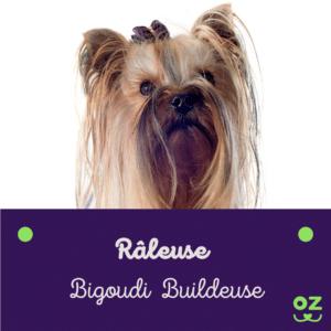 yorkshire terrier assurance