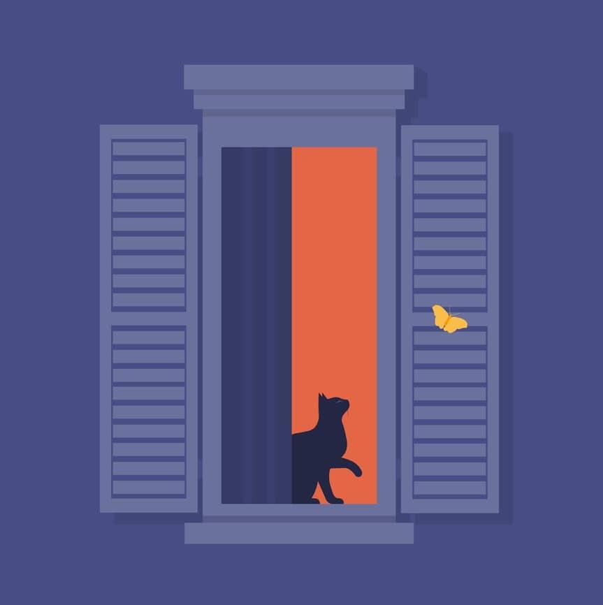 chat fenêtre papillon