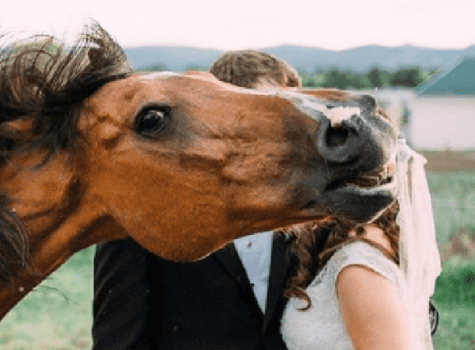 cheval photo mariage