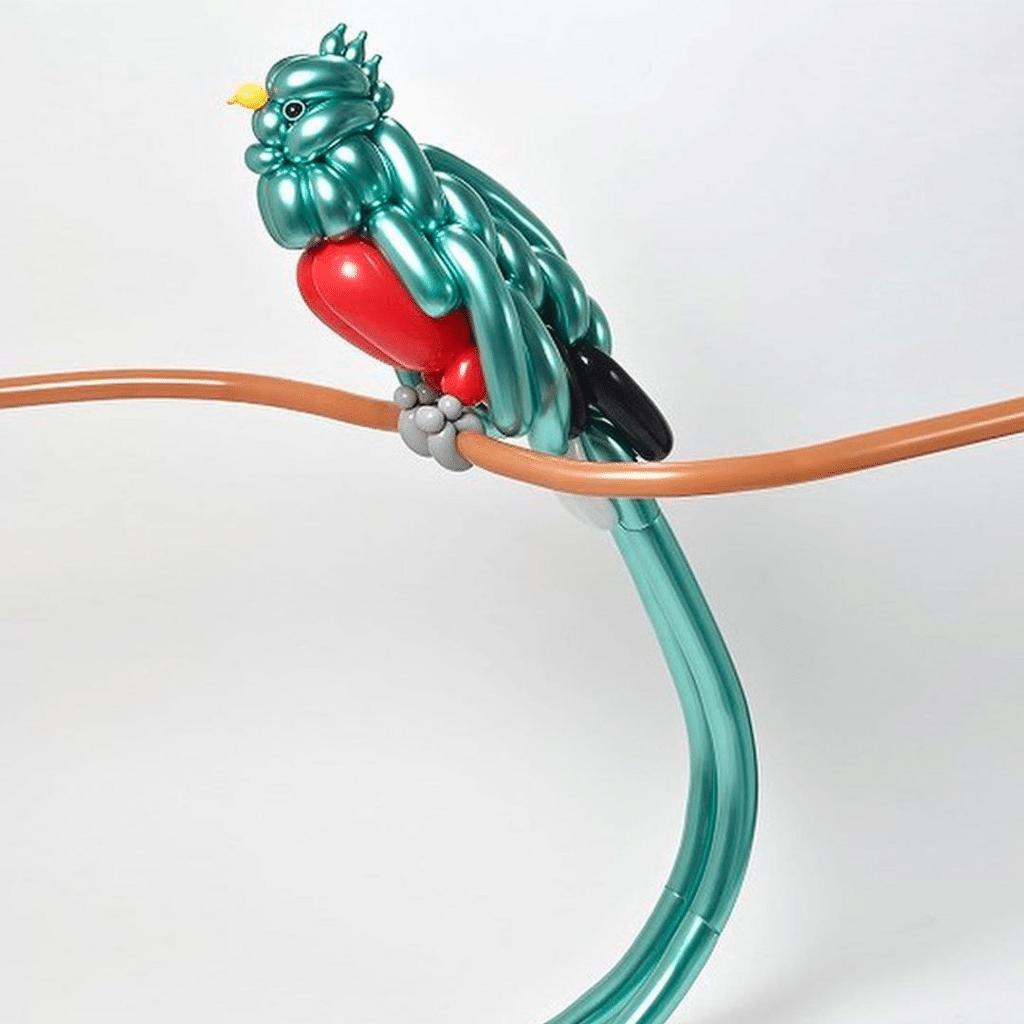 Matsumoto perruche